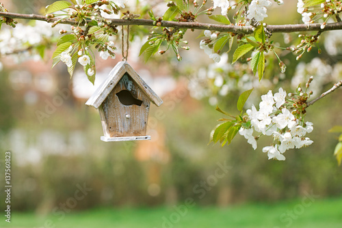 Photo Little Birdhouse in Spring with blossom cherry flower sakura