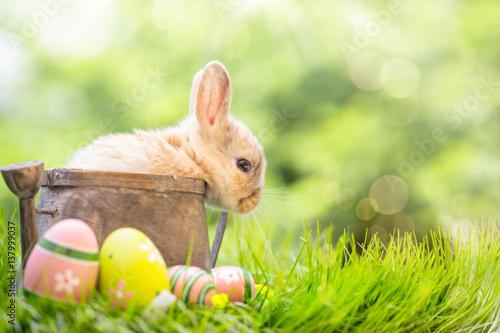 Kaninchen Baby Osterkarte