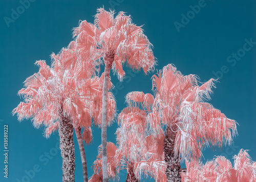 Wallpaper Mural Pink palm trees and blue sky