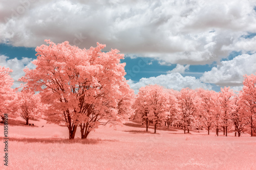 Canvas Print Pink forest