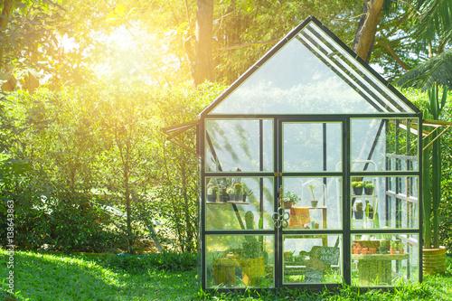 Fotografia green house in the home garden, planting cactus nursery.
