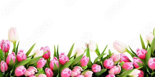 Fototapeta premium Różowa tulipanowa granica kwiaty