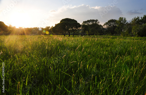 Photo Green grass meadow in the park at sunset
