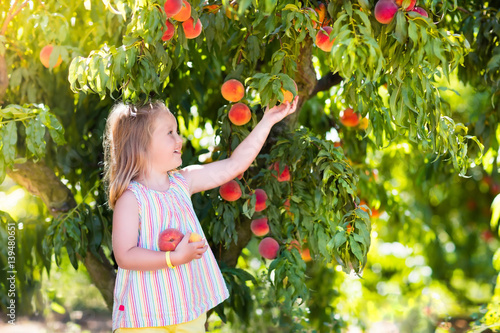 Fotografia, Obraz Child picking and eating peach from fruit tree