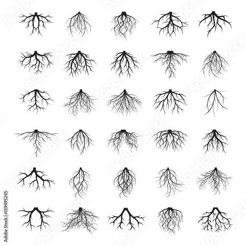Wallpaper Mural Big set of roots and element of trees. Vector Illustration.