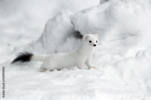 Fotografia animal