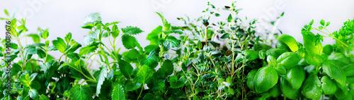 Zielone świeże aromatyczne zioła - melisa, mięta, tymianek, bazylia, natka pietruszki na białym tle. Ramka kolaż transparent z roślin. Copyspace. Widok z góry. Stonowany efekt.