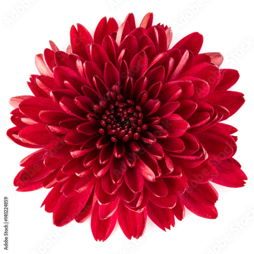 Red chrysanthemum flower isolated on white background Fototapete