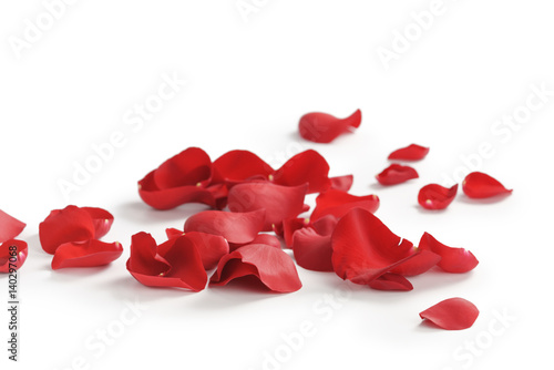 Wallpaper Mural red rose petals on white background, abstract photo