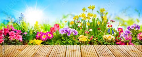 Valokuva Spring flowers in garden