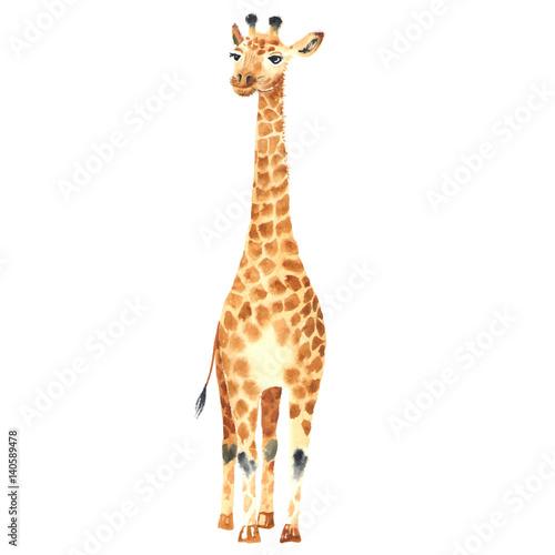 Fototapeta premium żyrafa dziecka akwarela