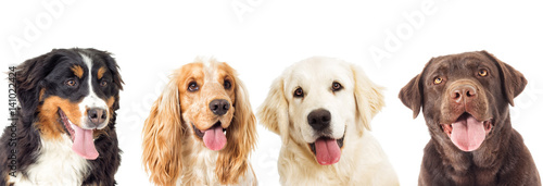Photo portrait dogs