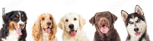Canvas Print portrait dogs