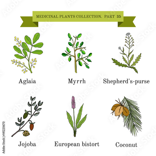 Stampa su Tela Vintage collection of hand drawn medical herbs and plants