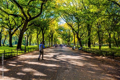 Fotomural Beautiful park in beautiful city