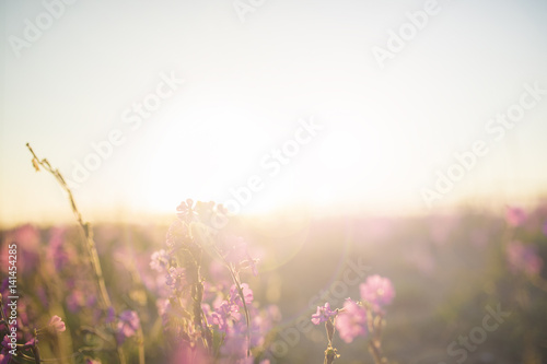Pink flowers on the beach at sunset
