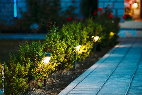 Valokuva Night View Of Flowerbed With Flowers Illuminated By Energy-Savin