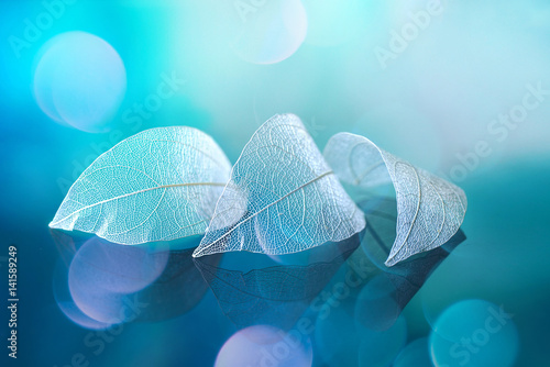 White transparent leafs on mirror surface with reflection on blue background with round glare bokeh macro. Abstract artistic image template border natural dreamy image.