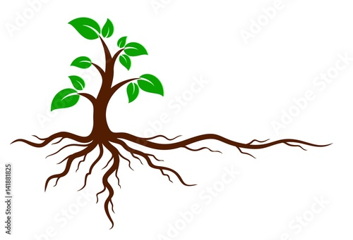 Photo Green tree with roots.