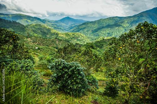 Fototapeta Blue mountains of Jamaica