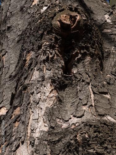 Invoice of tree bark in spring sun