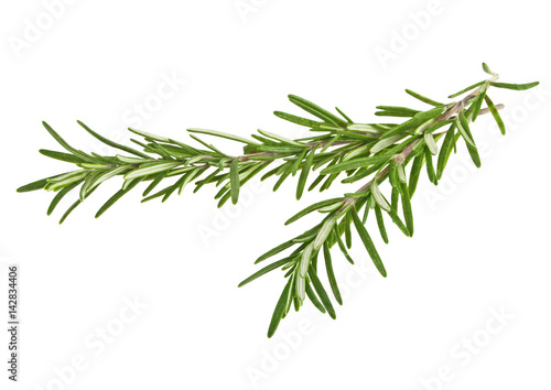 Photo Two sprig of rosemary isolated on white background