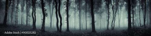 Fotografie, Tablou dark forest panorama fantasy landscape