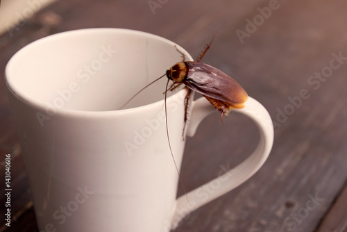 Close up cockroach on white cup drink