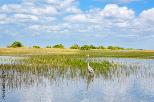 Photo Florida wetland, Airboat ride at Everglades National Park in USA.