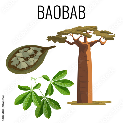 Carta da parati African baobab tree and fruit with seeds color icon emblem