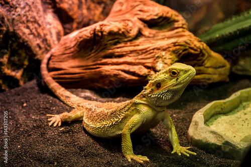 Exhibition of terrarium animals in Uzhhorod
