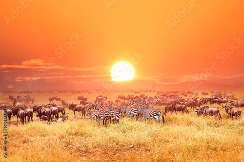 Zebry i antylopy w Africa parku narodowym. Zachód słońca.