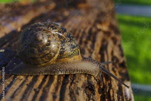 Escargot sur une planche