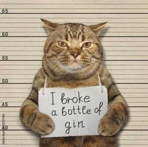 The wild cat broke a bottle of expensive gin Fototapeta