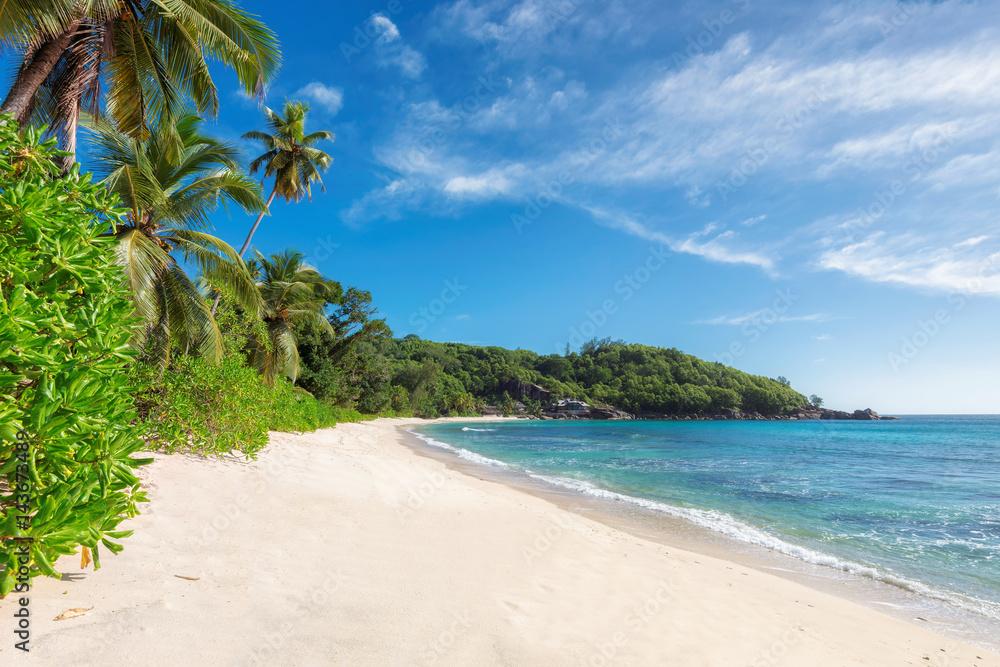 Egzotyczna piaszczysta plaża <span>plik: #143673489   autor: lucky-photo</span>