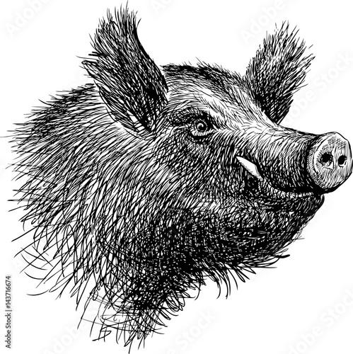Fotografia, Obraz head of a wild boar
