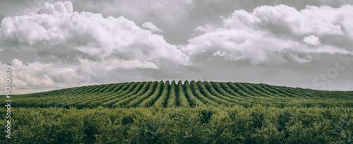 Foto Almond Trees