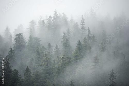 Plakat Zamglony las w górach Alaski