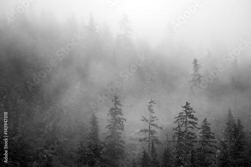 Plakat Drzewa w górach o ranku w Alasce