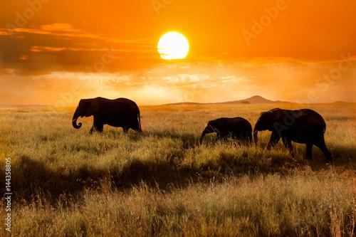 Rodzina słoni o zachodzie słońca w parku narodowym Afryki