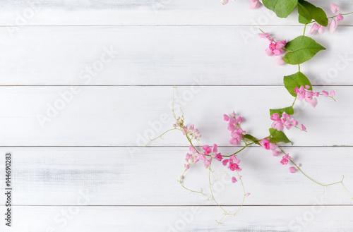 Obraz na plátně Mexican Creeper pink flower on white wood background