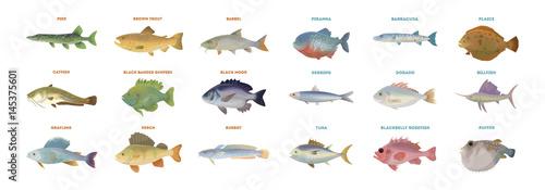 Photo River fish set. Isolated fish on white background.