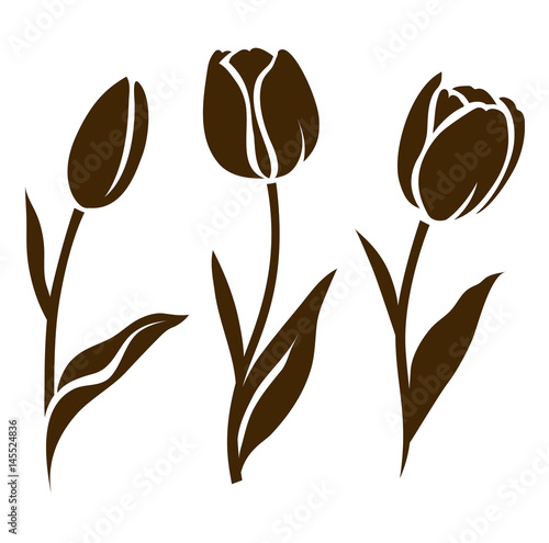 Set of tulip silhouette. Vector illustration. Collection of decorative flowers #145524836