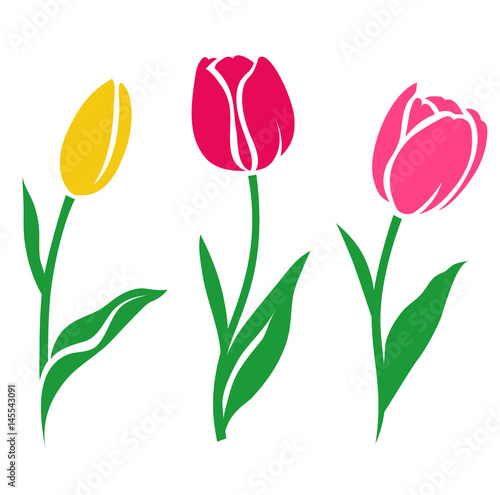Set of colorful tulip silhouette. Vector illustration. Collection of decorative flowers #145543091