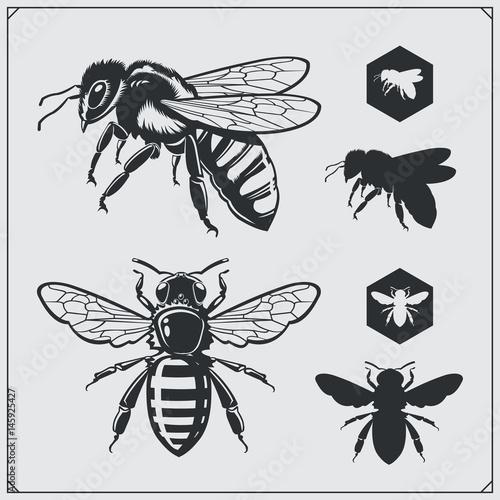 Obraz na plátně Set of honey emblems and design elements