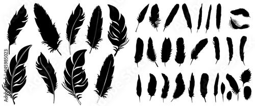 Fotografiet Vector, silhouette of bird feather, collection