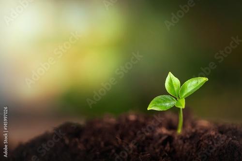 Vászonkép Growing sprout.