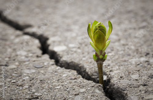 Fotografia Close up of plant growing up from crack in the asphalt road with copy space