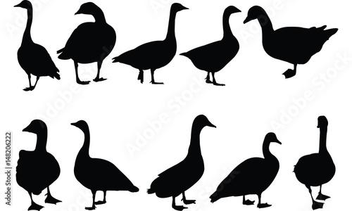 Fotografie, Obraz Goose Silhouette vector illustration