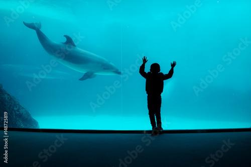Boy watching captive dolphin performing in large aquarium Fototapete